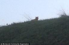 Người dân hoảng sợ khi phát hiện con hổ lang thang gần bãi đỗ xe