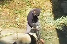 Người đàn ông bị chỉ trích kịch liệt vì đánh đập chú gấu trúc con