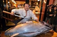 Chủ cửa hàng sushi mua con cá ngừ khổng lồ với giá 37.000USD