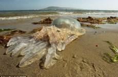 Phát hiện thêm hàng nghìn sinh vật biển mới trong năm 2014