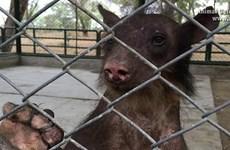 [Photo] Chú gấu rụng lông, gẫy hết răng vì bị rạp xiếc tra tấn