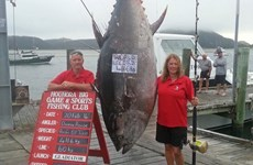 Vinh danh người phụ nữ câu được con cá ngừ nặng hơn 400kg