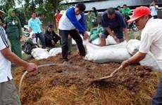 Indonesia được FAO vinh danh nhờ thành công trong chống đói nghèo