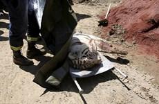 Gruzia: Hổ xổng chuồng sau lũ quét cắn chết một người đàn ông