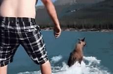 Người đàn ông hành hạ, ngược đãi con nai sừng tấm trên sông