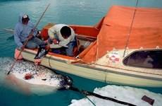 Iceland phản đối thỏa thuận về cấm đánh bắt cá tại Bắc Cực