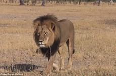 """Tên thợ săn """"bệnh hoạn"""" bắn hạ và chặt đầu chú sư tử nổi tiếng"""