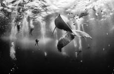 Những bức ảnh đẹp nhất cuộc thi National Geographic Traveler