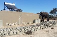 Du khách phát hoảng vì voi uống nước trong bồn cầu nhà vệ sinh