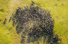 [Photo] Cảnh tượng hùng vĩ từ trên cao về các loài động vật