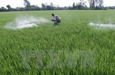 Trà Vinh: 2.100ha lúa Hè Thu xuống giống muộn vì khô hạn