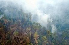 Thái Lan và Indonesia nỗ lực tìm giải pháp cho vấn đề khói mù