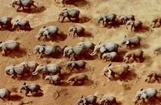 Bốn nhân viên kiểm lâm bị những kẻ săn trộm voi bắn chết