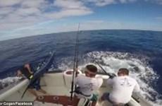 Cá kiếm khổng lồ lao thẳng lên thuyền, suýt đâm chết người