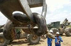 Sửng sốt với sự xuất hiện của con trăn khổng lồ dài gần 10m