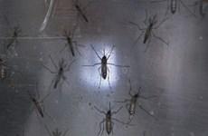 Xuất hiện ca nhiễm virus Zika đầu tiên ở thai phụ tại châu Âu