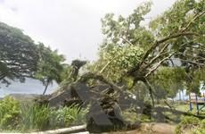 Fiji: Số người thiệt mạng do siêu bão Winston tăng lên 42
