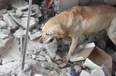 Chú chó quả cảm qua đời vì kiệt sức sau khi cứu sống 7 người