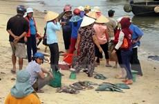Các bãi biển ở Quảng Trị vắng du khách vì hiện tượng cá chết