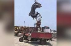 Phẫn nộ cảnh cá mập voi bị săn bắt trái phép ở Trung Quốc