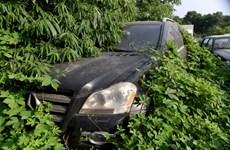Xót xa cảnh cỏ dại phủ kín siêu xe bị bỏ rơi ngoài bãi