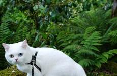 """Chú mèo """"nổi như cồn"""" nhờ đôi mắt đặc biệt có 2 màu khác nhau"""