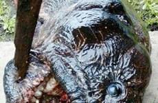 Ngư dân Nga bắt được con cá bí ẩn có vẻ ngoài vô cùng đáng sợ