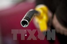 Đồng USD tăng giá khiến giá dầu giảm nhẹ trên thị trường châu Á