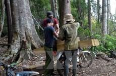 Kỷ luật các cá nhân có liên quan tới vụ phá rừng Đăk Glei