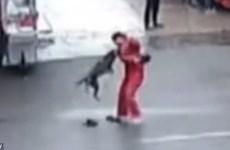 Con chó hung dữ cắn hơn 20 người đi đường trước khi bị bắn chết