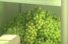 [Video] Cẩn trọng với hoa quả Trung Quốc đội lốt hàng Việt Nam