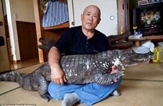 Cụ ông Nhật Bản gây sửng sốt khi làm bạn với cá sấu suốt 34 năm