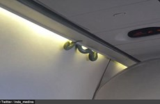 Rắn đột ngột bò trong khoang máy bay, hành khách tán loạn