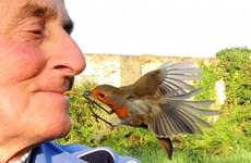 Người đàn ông gây sửng sốt khi mớm cho chim ăn bằng miệng