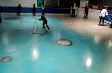 [Video] Sân trượt băng dùng 5.000 con cá đông lạnh để trang trí