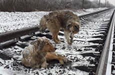Cảm động chú chó sưởi ấm, bảo vệ cho bạn thân trong suốt hai ngày