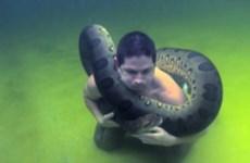 Rùng mình cảnh diễn viên hài ôm trăn khổng lồ lặn xuống nước