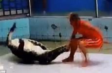 Rùng mình cảnh huấn luyện viên bị cá sấu cắn trong lúc trình diễn