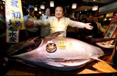 """""""Vua cá ngừ"""" gây sốc khi chi hơn 14 tỷ đồng mua 1 con cá ngừ"""