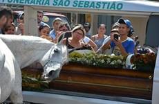 Rớt nước mắt cảnh con ngựa khóc trong đám tang của người chủ