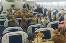 Ngỡ ngàng cảnh 80 chim ưng chiếm hết khoang hạng nhất máy bay