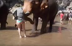 [Video] Hốt hoảng cảnh con voi hất tung nữ du khách lên cao