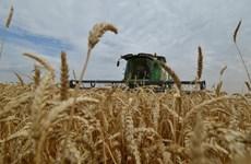 """Bị phương Tây cấm vận, """"cơ hội vàng"""" cho ngành nông nghiệp Nga"""