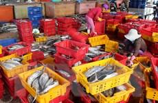 Cấm khai thác một số loài hải đặc sản trên vùng biển Bình Thuận
