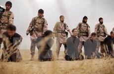 SOHR: Các thành viên IS hành quyết 19 dân thường ở Syria