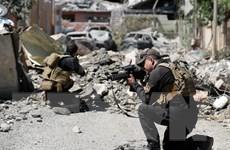 Iraq: Nhiều làng mạc và thị trấn ở Tây Mosul được giải phóng