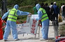 Hàn Quốc lần đầu phát hiện trường hợp nhiễm cúm gia cầm ở vịt