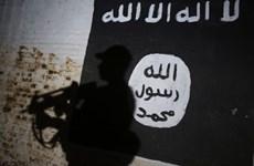 Interpol truy bắt 173 phần tử thánh chiến có thể tấn công châu Âu
