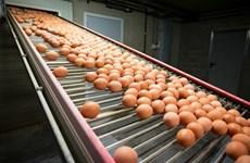 """Bê bối """"trứng bẩn"""" tại châu Âu tiếp tục lan rộng ra ngoài khu vực"""
