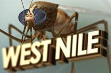 Mỹ: Thêm một trường hợp tử vong vì nhiễm virus Tây sông Nile